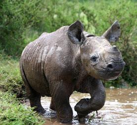 Baby-black-rhino - Environment News South Africa