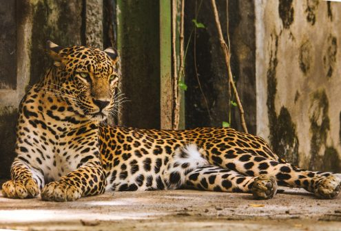 steps taken to conserve wildlife in india