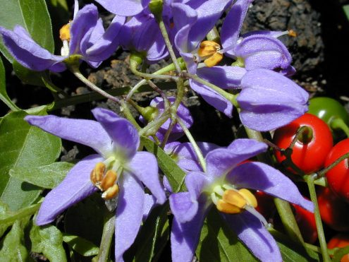 Invasive Plants in South Africa Landowners Asked to Report