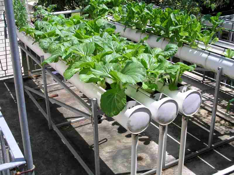 a beginner s guide to hydroponic gardening. Black Bedroom Furniture Sets. Home Design Ideas