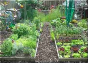 Vegetables Fruits And Herbs How To Grow Food Cheaply