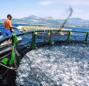 Details together with 3699604428 further Details moreover Aquaculture in south africa also Zeugnis. on aquaculture