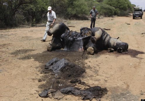 impacts of poaching on the environment and country Poaching has a considerable negative how does poaching affect the environment a: the hunting of elephants is illegal in every country in which elephants.