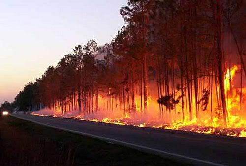 how to stop forest fires