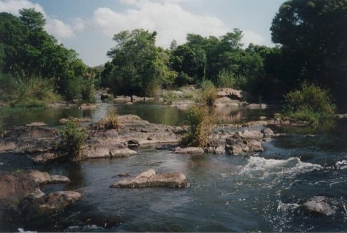 Cocktail of bacteria in SA's rivers