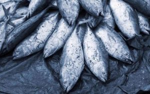 small-scale-fisheries