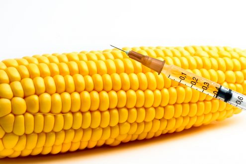 """an overview of the genetically modified corn The concept of """"genetically modified organisms,"""" or gmos, has received a large amount of attention in recent years indeed, the relative number of google searches for """"gmo"""" has more than tripled since late 2012 [1."""