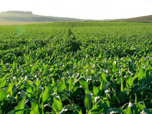 Sa Sends Last Batch Of Maize To Lesotho