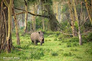 Mitchell Krog Wildlife Photography